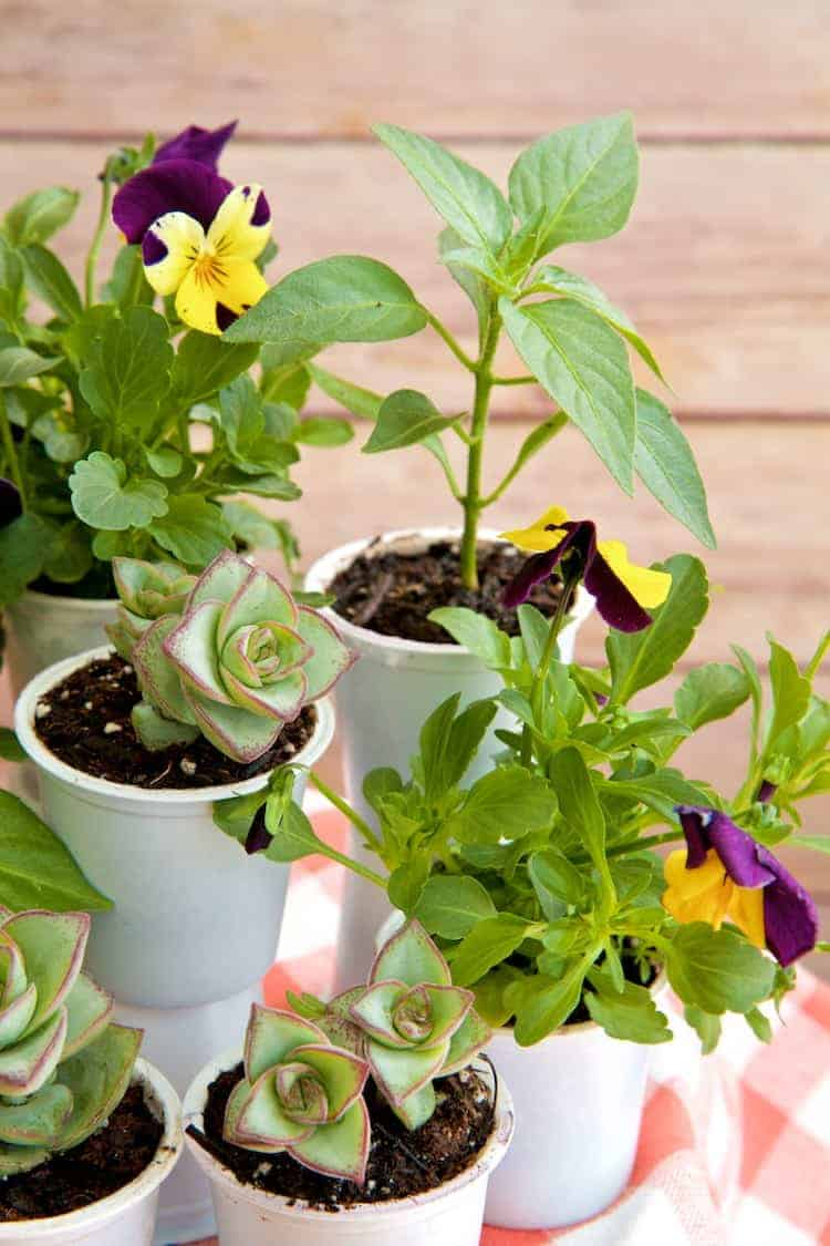 k cup planters 2