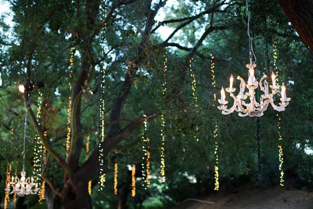 Lights in the Trees