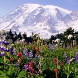 Family Road Trip Ideas to 5 National Parks
