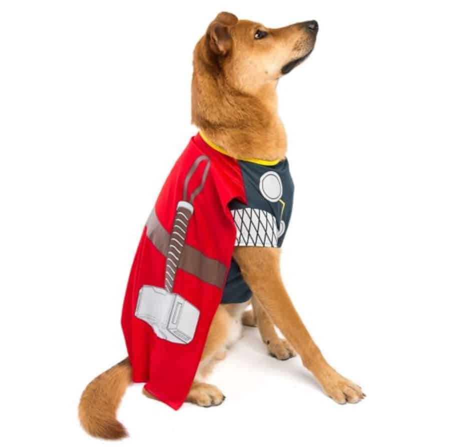 awesome halloween costumes for pets