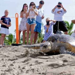Sea Turtle Conservation and What You Can Do to Help