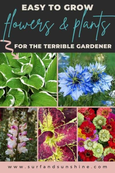 easy to grow flowers and plants