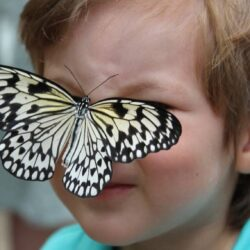 The Aruba Butterfly Farm and Fun Facts for Kids