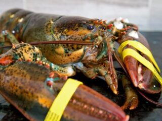 how to grill live lobster 1 1